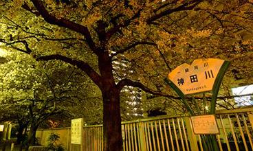 日本常规留学